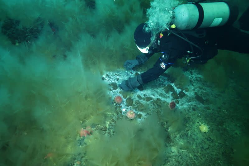 A handout image shows researcher Andrew Thurber diving above microbial clusters in Antarctica