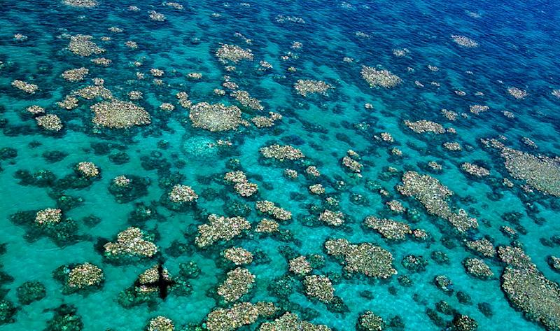 An aerial view of bleaching in the Cairns-Townsville region of Australia's Great Barrier Reef (AFP Photo/Ed ROBERTS)