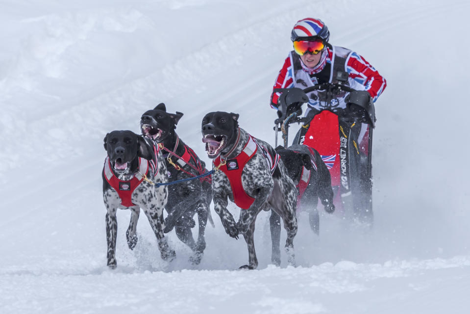 Vickie Pullin's four-dog team Rio, Maverick Luka and Luna, at the 2018 Italian snow championships (Massimo Mazzasogni)