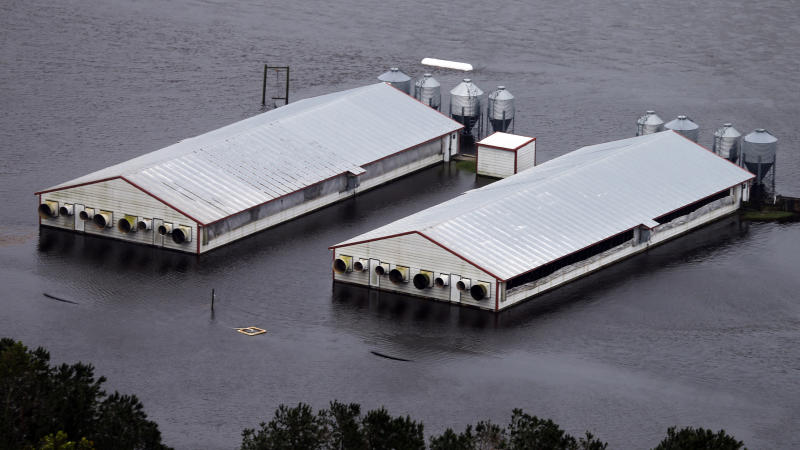 A hog farm is inundated with floodwaters from Hurricane Florence near Trenton, N.C., Sunday, Sept. 16, 2018. (AP Photo/Steve Helber)