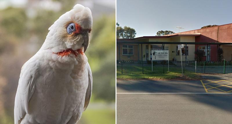 A corella is pictured on the left and on the right is One Tree Hill Primary School in Adelaide. A number of corellas fell ill and fell from the sky in front of kids on school holidays.