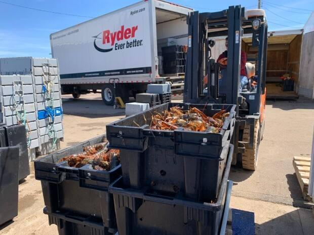 Crates full of fresh live lobster are taken by a buyer to a refrigerated truck.