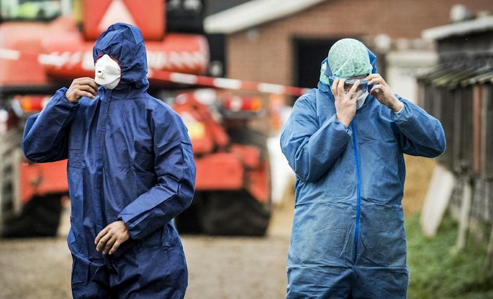 Workers in protective gear get ready to cull ducks as part of prevention measures against bird flu at a duck farm in Hierden, central Netherlands on November 27, 2016 (AFP Photo/Remko de Waal)