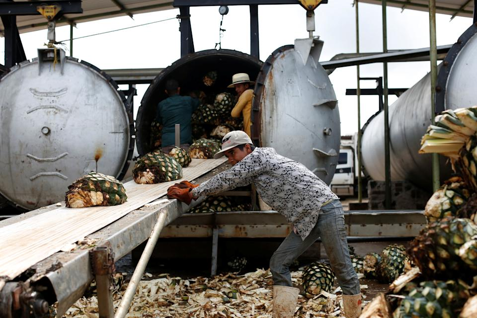 Workers loads blue agave hearts into an oven for distillation to make tequila at a factory in Amatitán, Jalisco, Mexico on Sept. 7, 2017. (Photo: Carlos Jasso / reuters)