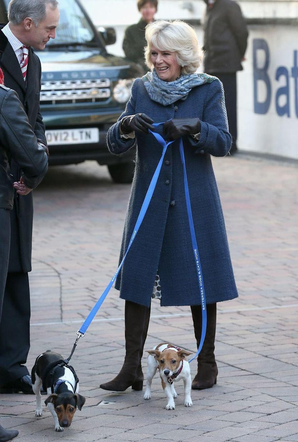 """<p>Prince Charles and Camilla are currently proud parents to two Jack Russell Terriers, Bluebell and Beth. Occasionally, they assist with Camilla's royal duties—sometimes even unveiling plaques themselves, as total champ <a href=""""https://www.townandcountrymag.com/society/tradition/a34917924/camilla-royal-dog-beth-unveils-plaque-video/"""" rel=""""nofollow noopener"""" target=""""_blank"""" data-ylk=""""slk:Beth recently did at the Battersea Dogs and Cats Home"""" class=""""link rapid-noclick-resp"""">Beth recently did at the Battersea Dogs and Cats Home</a>.</p>"""