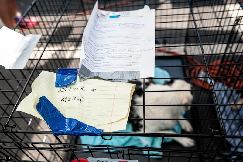 Intake information on a dog kennel in a temporary animal rescue shelter in the Katy Mills parking lot in Katy, Texas, on Sunday. (Joseph Rushmore for HuffPost)