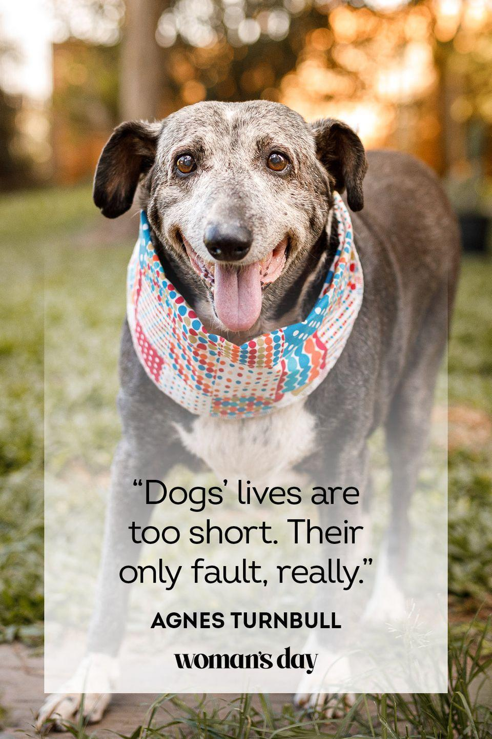 """<p>""""Dogs' lives are too short. Their only fault, really.""""</p>"""