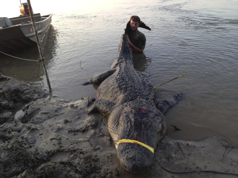 REFILE - CAPTION CLARIFICATION Dustin Bockman is pictured with his record setting alligator, weighing 727 pounds (330 kg) and measuring 13 feet (3.96 m), captured in Vicksburg, Mississippi on September 1, 2013, in this picture released to Reuters on September 3, 2013. Dustin Bockman, a 27-year-old UPS driver, and his crew spotted the mammoth creature in the Mississippi River and trailed it for two hours before getting close enough to spear it. It took another two hours to hook it with a second line and noose its neck. REUTERS/Ryan Bockman/Handout via Reuters (UNITED STATES - Tags: ANIMALS ENVIRONMENT SOCIETY)   ATTENTION EDITORS - THIS IMAGE WAS PROVIDED BY A THIRD PARTY. FOR EDITORIAL USE ONLY. NOT FOR SALE FOR MARKETING OR ADVERTISING CAMPAIGNS. THIS PICTURE IS DISTRIBUTED EXACTLY AS RECEIVED BY REUTERS, AS A SERVICE TO CLIENTS. NO SALES. NO ARCHIVES