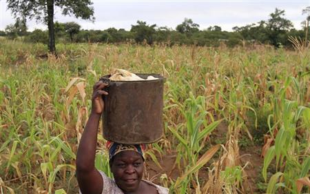 Martha Mafa, a subsistence farmer, carries a bucket of maize on her head in Chivi, about 378km (235 miles) south-east of the capital Harare