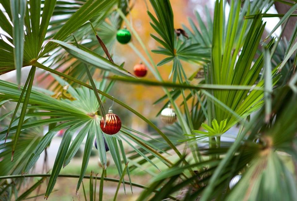 <p>Surprise the kids by taking out the Christmas decorations and celebrating the holiday . . . in July! Play Christmas music, bake cookies, and decorate your houseplants with ornaments. Just don't leave the decor on display for too long, or your friends and neighbors will think you've lost it!</p>