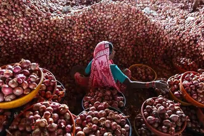 onion prices, ban on onion export,  Lasalgaon,  APMC,  Nashik,  Pimpalgaon Baswant,  wholesale rate of onions