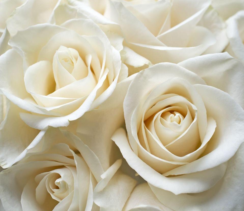 """<p>It might be best to save these beauties for a more somber moment. Generally associated with marriage and spirituality, they actually mean <a href=""""https://www.proflowers.com/blog/rose-colors-and-meanings"""" rel=""""nofollow noopener"""" target=""""_blank"""" data-ylk=""""slk:&quot;a heart unacquainted with love.&quot;"""" class=""""link rapid-noclick-resp"""">""""a heart unacquainted with love.""""</a></p><p><a class=""""link rapid-noclick-resp"""" href=""""https://go.redirectingat.com?id=74968X1596630&url=https%3A%2F%2Fwww.1800flowers.com%2Frose-elegance-premium-long-stem-90109&sref=https%3A%2F%2Fwww.goodhousekeeping.com%2Fholidays%2Fvalentines-day-ideas%2Fg1352%2Frose-color-meanings%2F"""" rel=""""nofollow noopener"""" target=""""_blank"""" data-ylk=""""slk:SHOP WHITE ROSES"""">SHOP WHITE ROSES</a></p><p><strong>RELATED:</strong> <a href=""""https://www.goodhousekeeping.com/beauty/g4944/best-rose-scented-perfumes/"""" rel=""""nofollow noopener"""" target=""""_blank"""" data-ylk=""""slk:14 Best Rose-Scented Perfumes for a Romantic Valentine's Day"""" class=""""link rapid-noclick-resp"""">14 Best Rose-Scented Perfumes for a Romantic Valentine's Day</a></p>"""