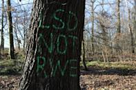 "A tree in the Hambach Forest is sprayed with the graffiti ""LSD not RWE"", near the town of Buir"