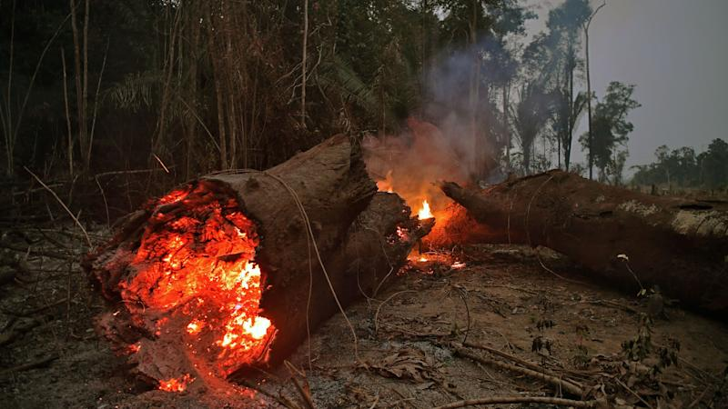 How Fashion Brands Like H&M and Veja Are Helping to Stop the Amazon Fires