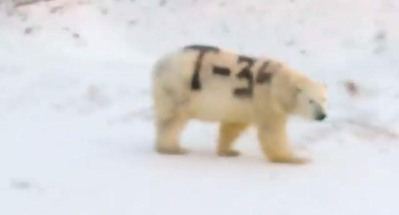 Spray-painted polar bear in Russia   Sergey Kavry/Facebook