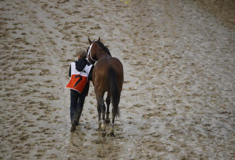 A judge has ruled against Maximum Security getting the overturning of his win overturned. (AP Photo/Charlie Riedel)