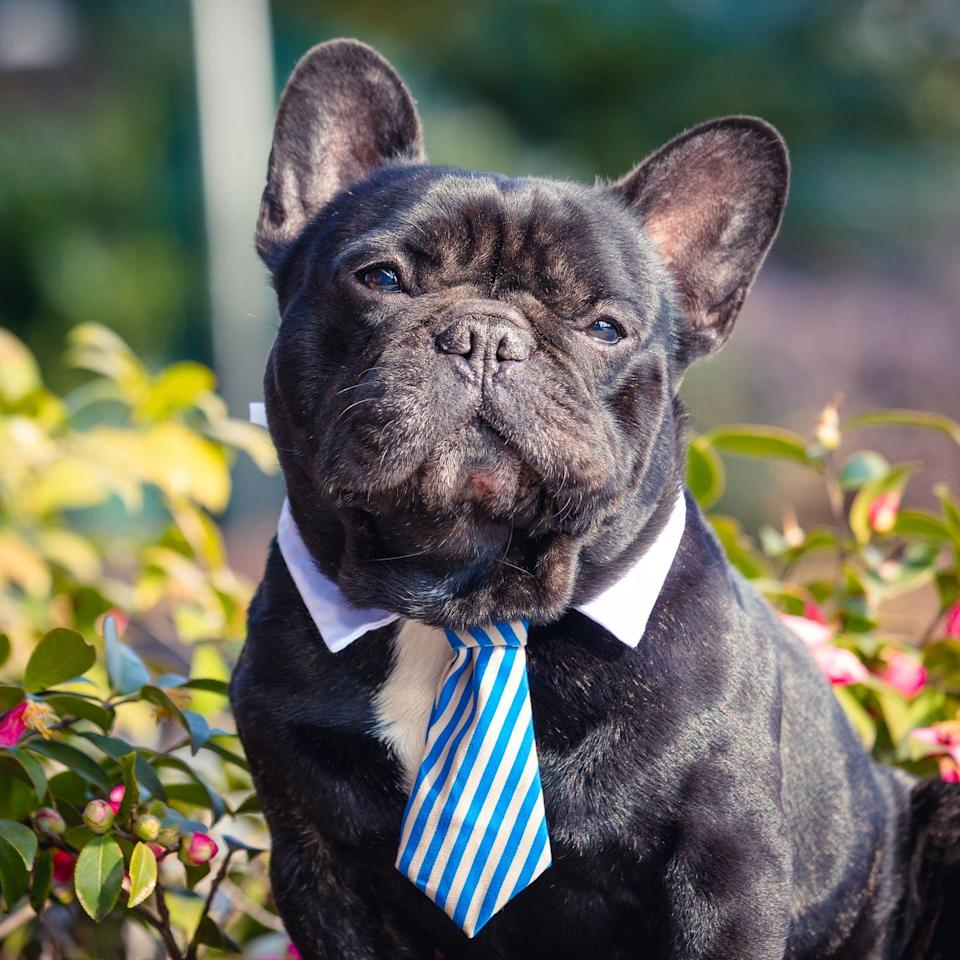 <p>If you have a real Mister Man on your hands, one of these names might fit the bill. </p><p>•Macho<br></p><p>•Stud</p><p>•Higgins </p><p>•Tiny (for a big dog)</p><p>•Dudley</p><p>•Clark</p><p>•The Manager</p><p>•Mister Tinkles </p><p>•Bossman</p><p>•Uncle Joe</p><p>•The Earl of Kibble</p><p>•Sir Barksalot </p><p>•Sparky </p><p>•Pinky </p><p>•Pal</p><p>•Boss</p>