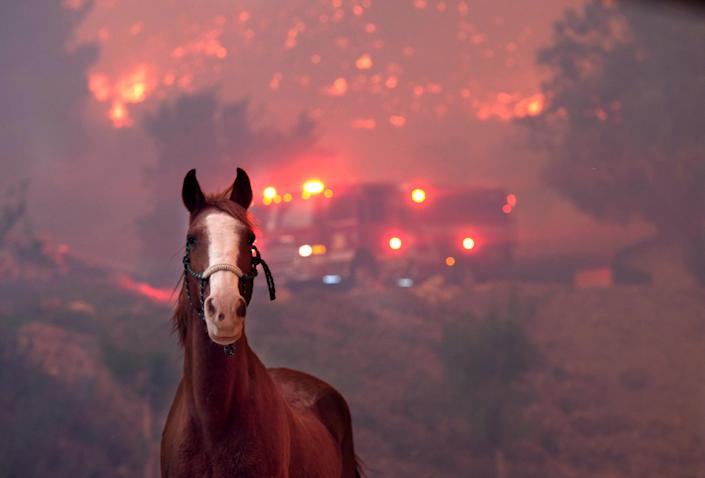 <p>Horses are spooked as the Woolsey Fire moves through the property on Cornell Road near Paramount Ranch on Nov. 9, 2018 inAgoura Hills, Calif. (Photo: Matthew Simmons/Getty Images) </p>