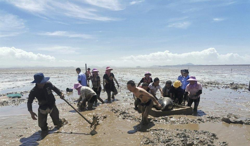 The beached pilot whales were discovered at around 8am on Tuesday and most were successfully moved off the beach in the same day. Photo: Handout