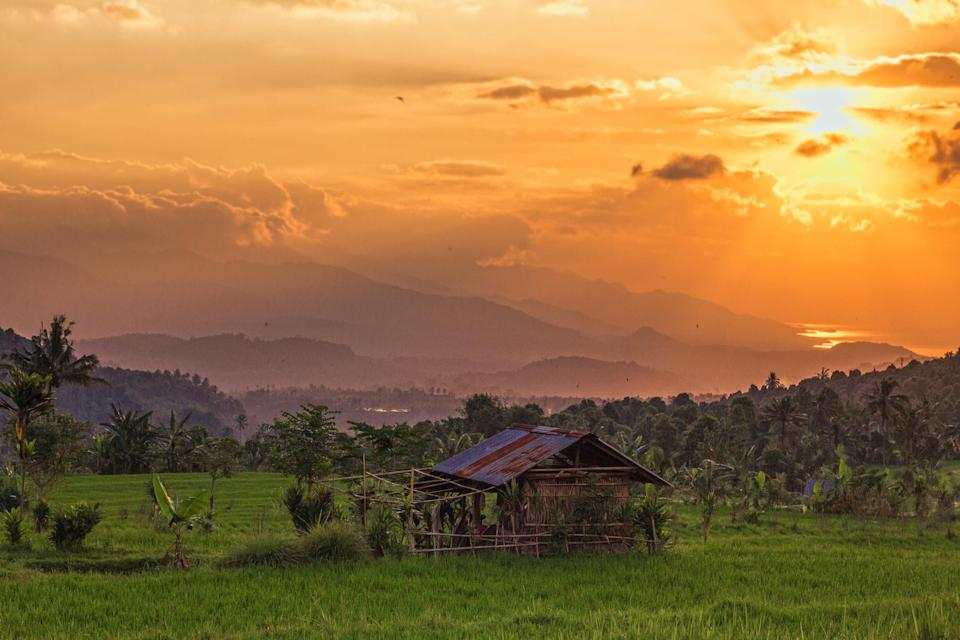A field in Northern Bali at sunset.