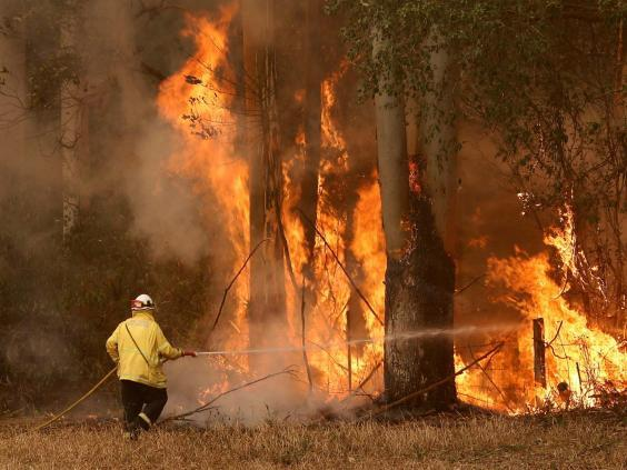 Since September, six people have died in a bushfire crisis that has engulfed the east of the country (Reuters)