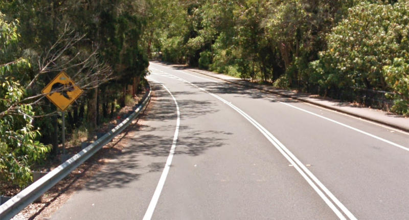The koalas were hit along Noosa Drive, Noosa Heads, near where there is a sign warning of koalas crossing in the area. Source: Google Maps