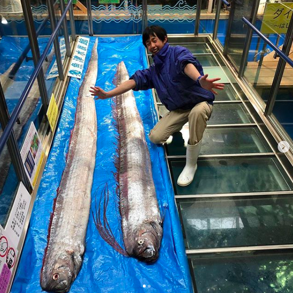 There are concerns the appearance of oarfish on the shores of Toyama could mean another earthquake will hit Japan. Source: Instragram/ Uoza Aquarium