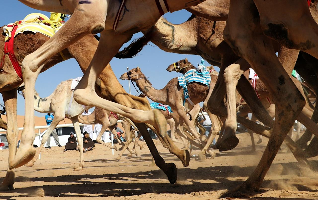 <p>Camels race during the Liwa 2018 Moreeb Dune Festival on Jan. 1 in the Liwa desert, some 250 kilometers west of Abu Dhabi, United Arab Emirates. (Photo: Karim Sahib/AFP/Getty Images) </p>