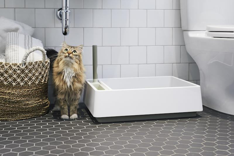 A perfect cat enjoys Tuft and Paw's newest litter box.