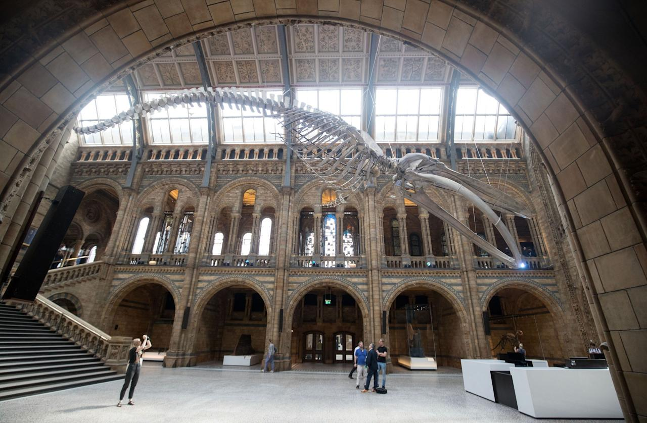 <p>Dippy has been replaced with Hope the whale to remind visitors that species on the edge of extinction can be saved. (PA) </p>