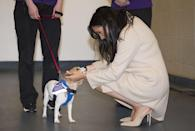 "<p>The Duchess of Sussex had two dogs when she was living in Toronto at the time she met Prince Harry—rescues named Guy and Bogart. According to <a href=""https://www.vanityfair.com/style/2019/07/meghan-markle-archie-rescue-dog"" rel=""nofollow noopener"" target=""_blank"" data-ylk=""slk:Vanity Fair"" class=""link rapid-noclick-resp"">Vanity Fair</a>, Guy made the move with Meghan to London when she and Harry began seriously dating, and Bogart remained behind in Toronto with friends of Meghan's.<br></p>"