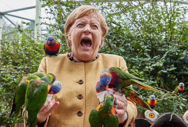 Federal Chancellor Angela Merkel visits the bird park Marlow (Photo: picture alliance via dpa/picture alliance via Getty I)