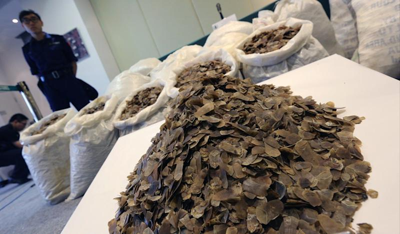 Hong Kong's black market in pangolin scales feeding demand in mainland China, campaigners fear