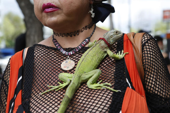 "Karla Esperanza, a transgender sex worker, poses for a photo with her iguana named ""Rectilio"" on International Sex Workers Day in Mexico City, Mexico, Sunday, June 2, 2019. On Friday, Mexico City's government voted in favor of a bill that no longer allows sex workers or their clients to be arrested or fined after a complaint. (AP Photo/Ginnette Riquelme)"