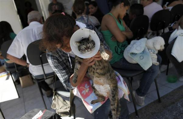 People queue up with their pets outside the Anclivepa-SP veterinarian hospital in Sao Paulo August 22, 2012.