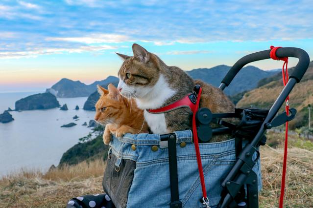 <p>Another view from the backpack, with Daisuke Nagasawa's well-traveled cats, Fuku-Chan and Daikichi. (Photo: Daisuke Nagasawa/Caters News) </p>