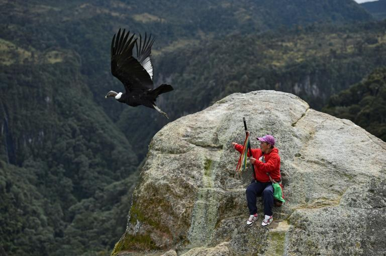 Indigenous people in Colombia's Purace national park are helping biologists conduct a census of condors, which are critically endangered in the country