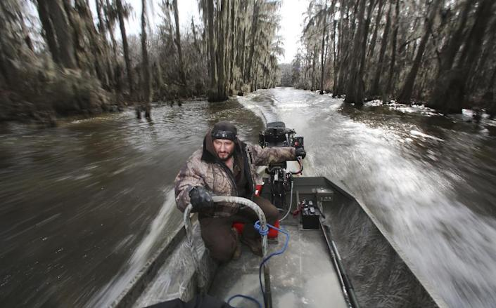 In this photo made Wednesday, Feb. 26, 2014, U.S. Fish and Wildlife officer John Stephens pilots a boat though cypress trees during a tour Caddo Lake near Uncertain, Texas. Scientists and researchers from a half-dozen state, federal and private agencies are planning to release up to 50 paddlefish into this Texas lake they once called home. (AP Photo/LM Otero)