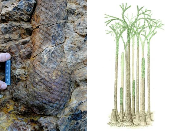 Fossilized Tropical Forest Found — in Arctic Norway