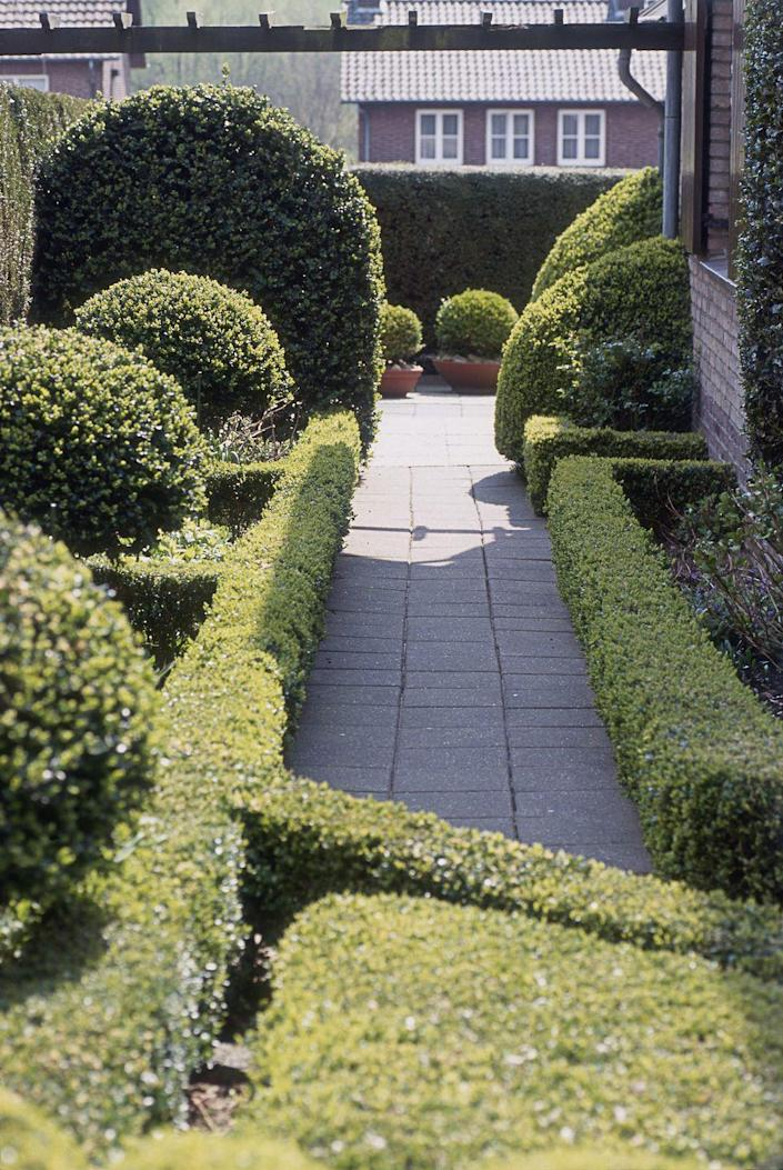 "<p>Why not use live plantings as a fence? Here, boxwoods are trimmed to create an aesthetically-pleasing border along a walkway. It's only about a foot tall, but the design naturally keeps traffic out of the planting beds. Plantings can be trimmed to a formal hedge or left to naturalize. </p><p><a class=""link rapid-noclick-resp"" href=""https://go.redirectingat.com?id=74968X1596630&url=https%3A%2F%2Fwww.homedepot.com%2Fp%2FPROVEN-WINNERS-Sprinter-Boxwood-Buxus-Live-Evergreen-Shrub-Green-Foliage-3-Gal-BUXPRC1003135%2F206820805&sref=https%3A%2F%2Fwww.thepioneerwoman.com%2Fhome-lifestyle%2Fgardening%2Fg32651791%2Fdecorative-garden-fence-ideas%2F"" rel=""nofollow noopener"" target=""_blank"" data-ylk=""slk:SHOP BOXWOOD SHRUBS"">SHOP BOXWOOD SHRUBS</a></p>"