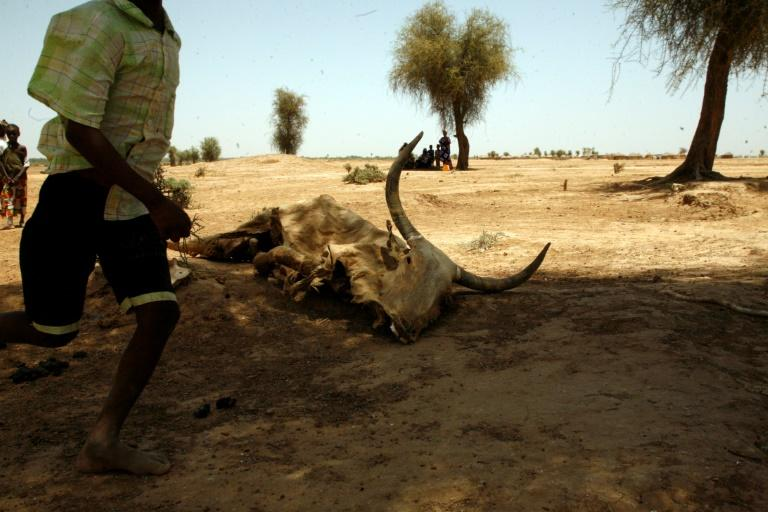 Heat waves are a direct threat to human live and can cause food shortages as well (AFP Photo/-)