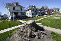 A large tree stump sits in front of homes, Friday, April 30, 2021, in Cedar Rapids, Iowa. A rare storm called a derecho plowed through the city of 130,000 last August with 140 mph winds and left behind a jumble of branches, downed powerlines and twisted signs. Now, city officials, businesses and nonprofit groups have teamed up with ambitious plans to somehow transform what is now a city of stumps back into the tree-covered Midwestern oasis along the Cedar River. (AP Photo/Charlie Neibergall)