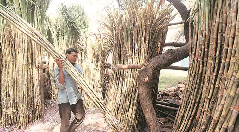 Maharashtra: Permission pending, 15 sugar mills unable to start ethanol production