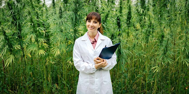 McGill is the only one among the elite U15 Canadian Research Universities to offer a full program to train biologists to grow cannabis (GETTY CREATIVE)