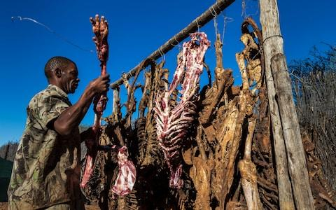 Lion bones from licensed hunts hang up to dry on a hunting concession in South Africa's North West Province in 2012 - Credit: Brent Stirton/2012 Getty Images