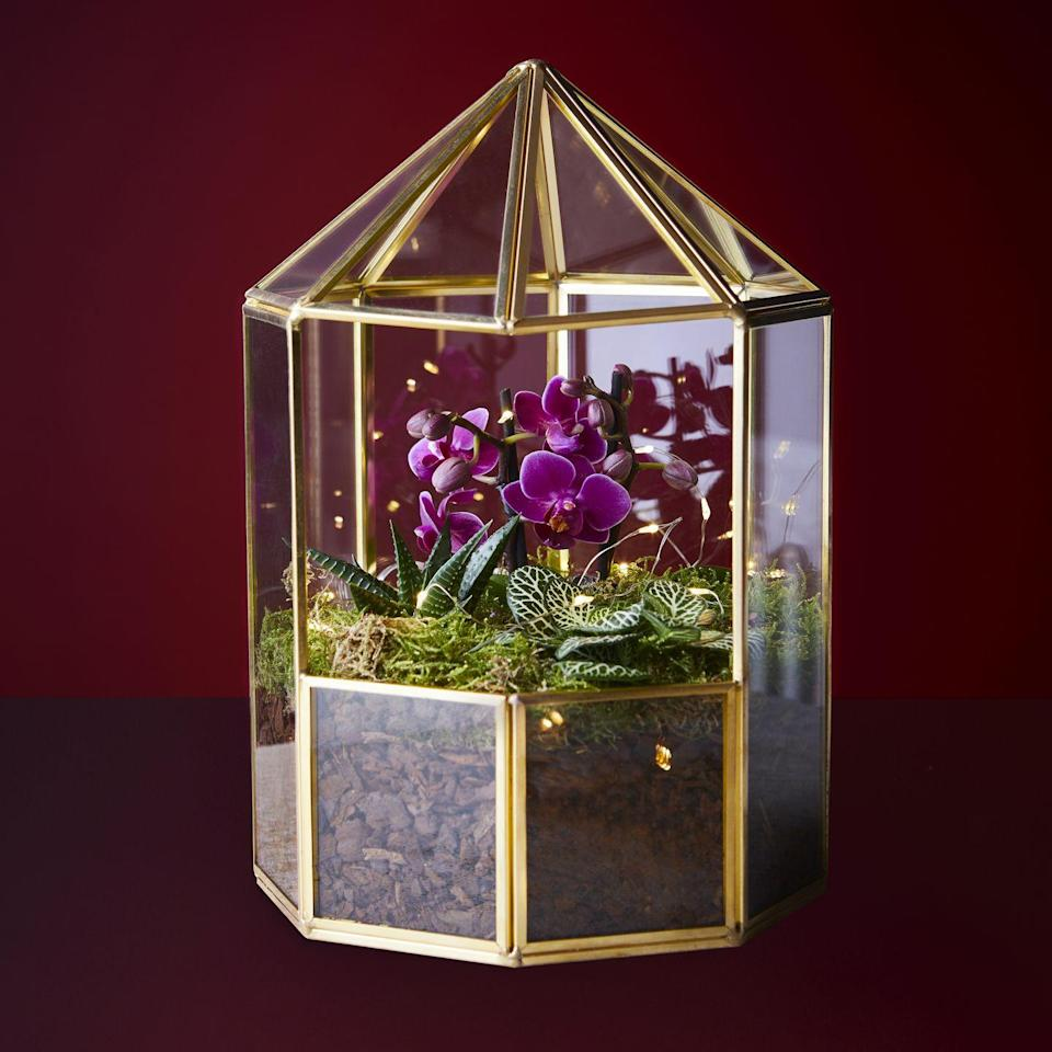 """<p>This gold-coloured terrarium contains a mini <a href=""""https://www.housebeautiful.com/uk/lifestyle/tips/a879/orchids-care-maintenance-tips/"""" rel=""""nofollow noopener"""" target=""""_blank"""" data-ylk=""""slk:orchid"""" class=""""link rapid-noclick-resp"""">orchid</a> and foliage plants, along with decorative string lights. It's the perfect Christmas centrepiece and it's at the top of our wish list!</p>"""