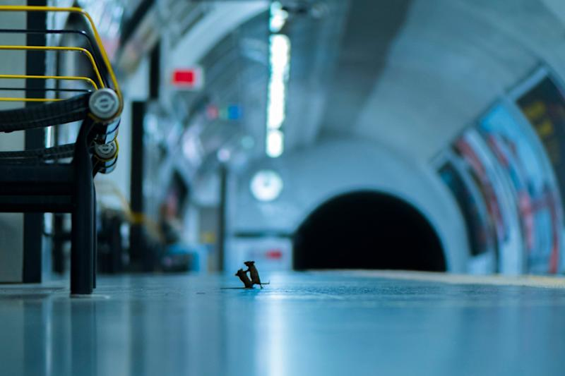 'Station squabble' by Sam Rowley, which shows mice inside a London Underground station: PA