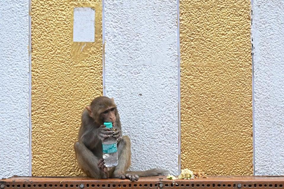 A monkey reportedly first snatched a bundle of notes and then showered it on the road  (Getty Images)