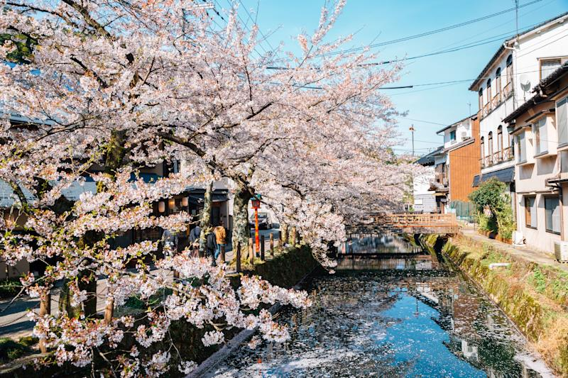 Kinosaki Onsen village with spring cherry blossoms in Hyogo, Japan