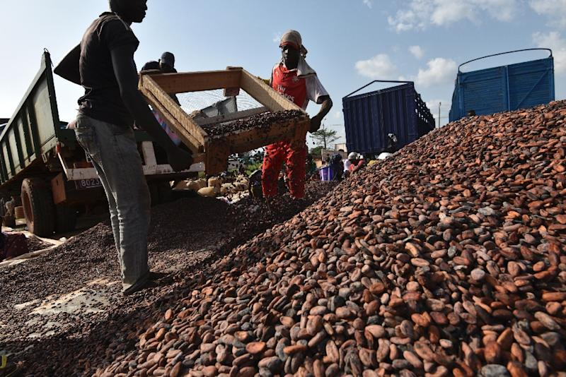 Ivory Coast, the world's top cocoa grower, wants to construct power stations burning cocao waste